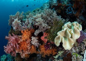 4 DAYS EXCLUSIVE WAKATOBI DIVING & SNORKELING (Wangi-wangi Island, Hoga Island plus Toliamba Hill & Kontamale)
