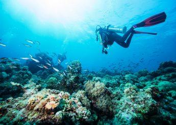 0812 9393 9797, 5h Kepulauan Togean Kursus Diving Di Togean Padi Open Water Dive Bersertifikat Padi