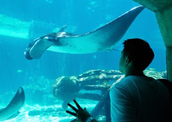 0812 9393 9797, Pulau Putri 2h1m  Undersea Aquarium & Glass Bottom  Dari Marina Ancol
