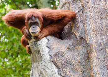 5 Days Borneo Wildlife Meet The Orangutan & Dayak Experience Tanjung Puting National Park
