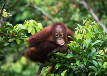 5d Wehea Wild Orangutan Plus Accomodation (Hotel & Guesthouse)