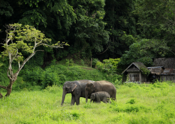 7d Borneo Pygmy Elephant Trekking Plus Accomodation (Hotel & Guesthouse)
