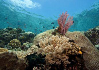 Northern Sulawesi Bunaken Snorkeling