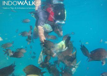 Private Trip Pulau Derawan Dan Danau Labuan Cermin 4h3m
